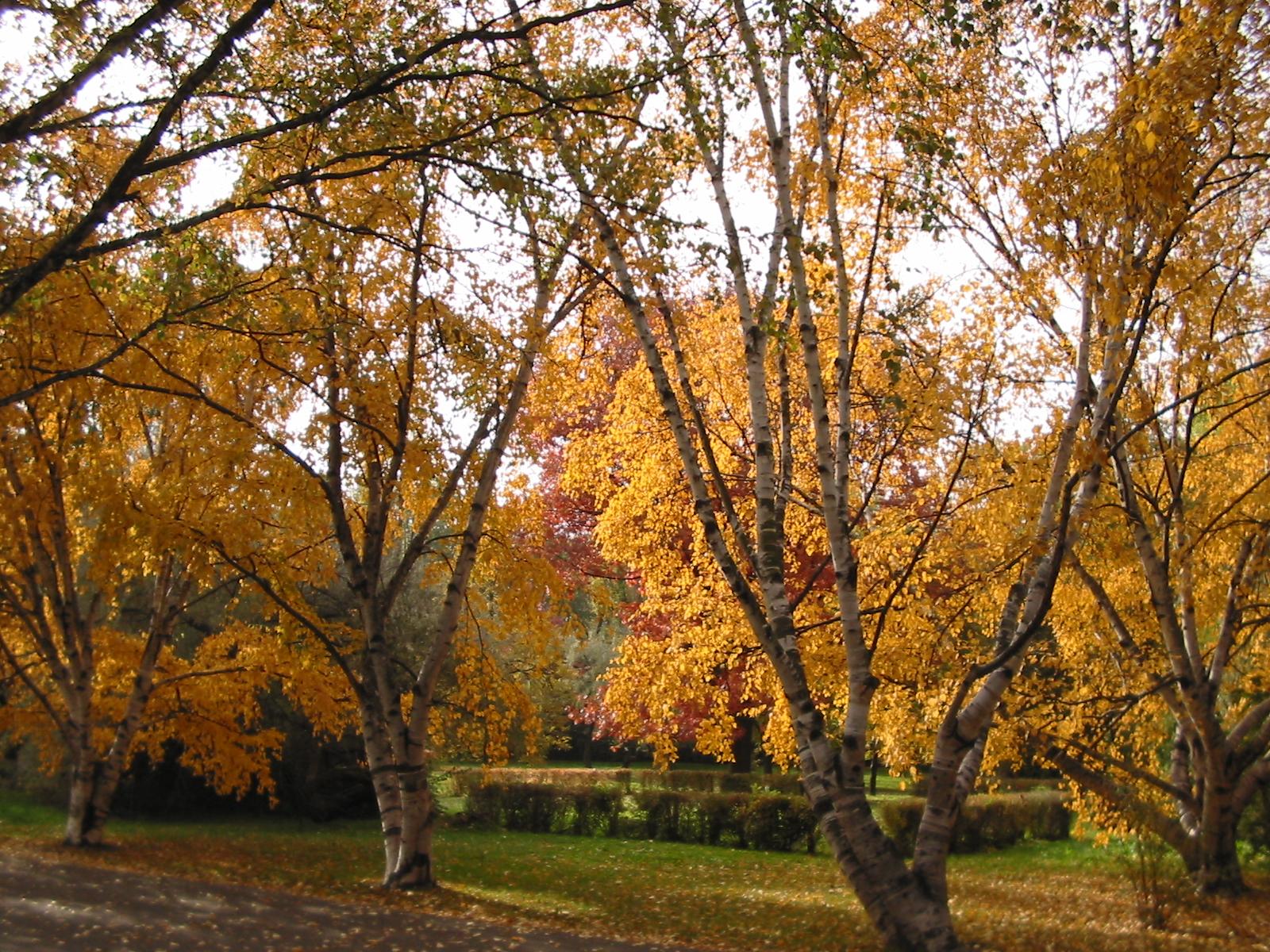 Dlaczego PO chce zabudować Park Szymańskiego?