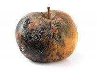 Cz. 1: Owoc ewolucji.