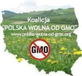 Komisja Europejska pozywa Polskę ws. GMO