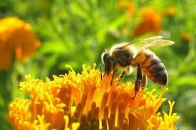 Dlaczego pszczoły nie zasypiają?