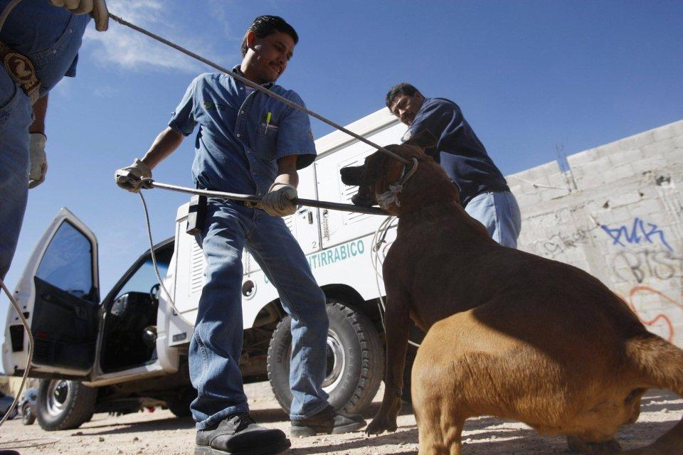 Raport NIK: Eksterminacja psów na masową skalę