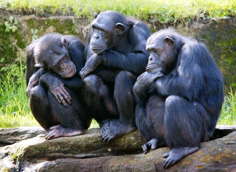 Doigraliśmy się. Prawa człowieka dla małpy