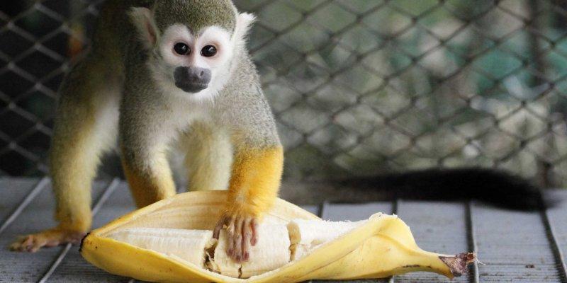 Nie dawaj małpie banana a władzy okrągłostołowcom
