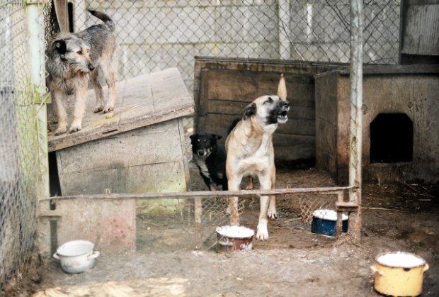 Co się dzieje w schronisku dla zwierząt w Celestynowie