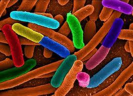 Gospoda pod E.coli…..