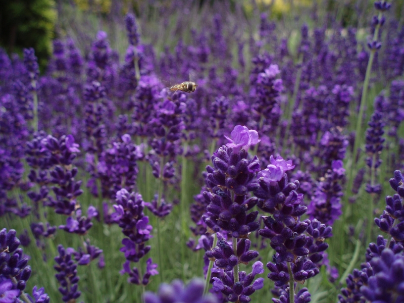 Ogród w odcieniach fioletu