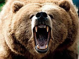 Nie drażnić niedźwiedzia !
