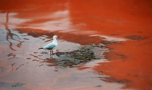 Apokalipsa- woda zmienia się w krew