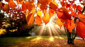 Jesień – czas na zdjęcia!