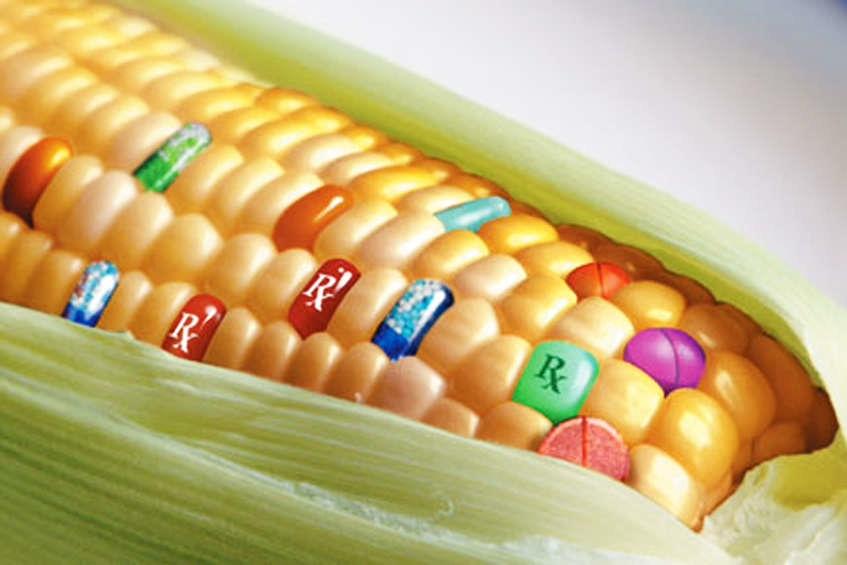 Resort środowiska tłumaczy się za nowelę ustawy o GMO