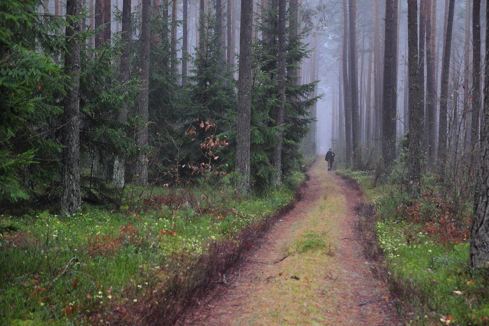 Montujemy drzwi do lasów, zanim je rozkradną