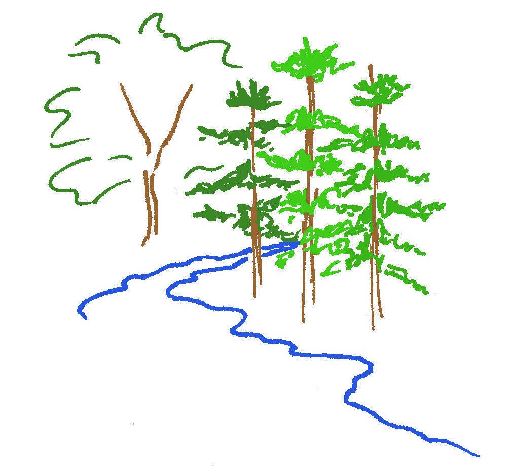 Las rośnie powoli – sprzedaje się szybko