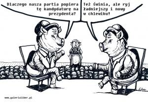 Świński_kandydat_1