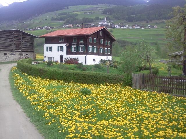 W Szwajcarii o kostce Bauma nikt nie słyszał