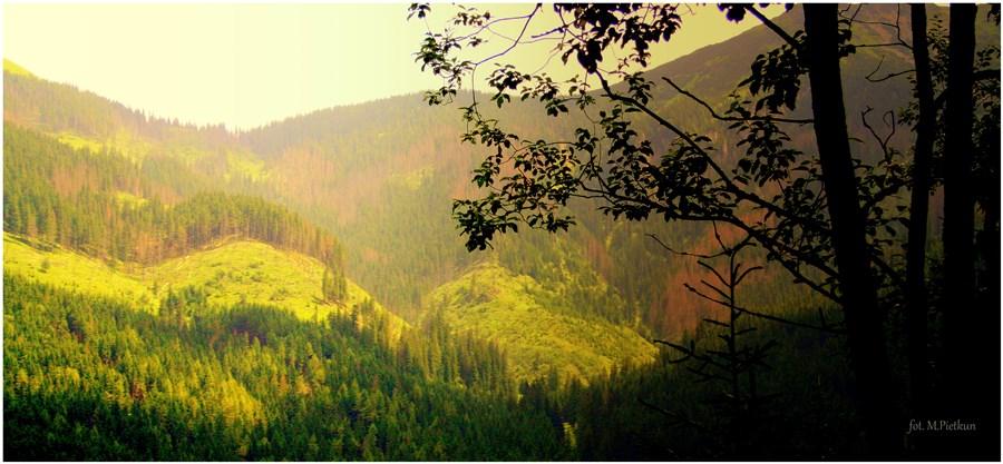 Opowieść o jeszcze zielonych lasach Cz. 2