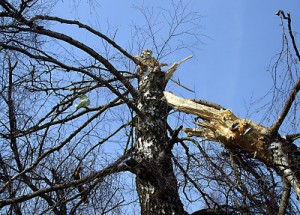 Tree_of_Polish_Air_Force_Tu-154_crash_(MAK_report)