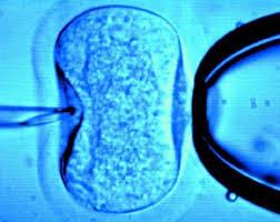 Przemilczane fakty o in vitro