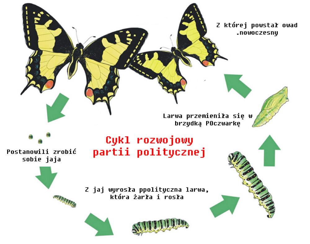 Cykl rozwojowy partii POlitycznej