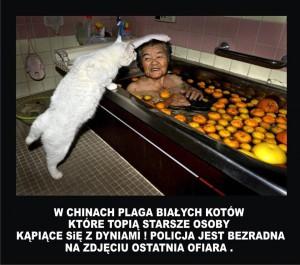 Plaga białych kotów w Chinach
