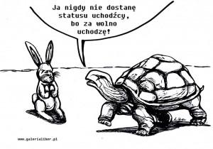 Żółw_uchodźca_1