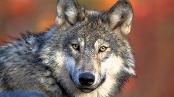 Coraz więcej zwierząt zarażonych świerzbem