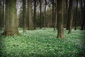 Bądźcie nocą w lesie cicho! Drzewa śpią…