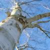 tree-2188495_960_720
