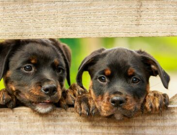 Higiena jamy ustnej psa równie ważna jak prawidłowe karmienie
