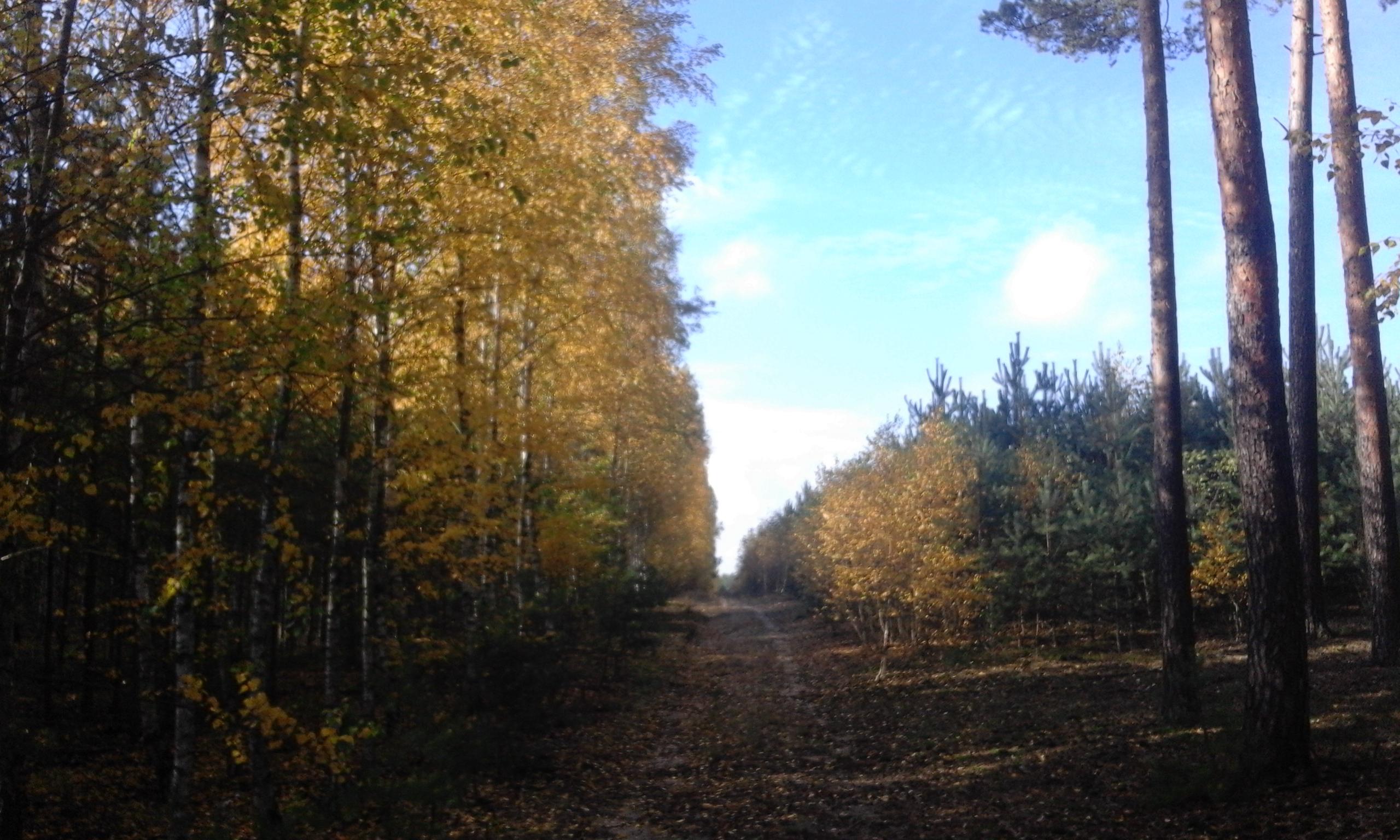 Obserwacje z jesiennego lasu
