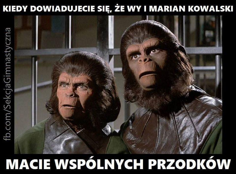 Małpy zdziwione