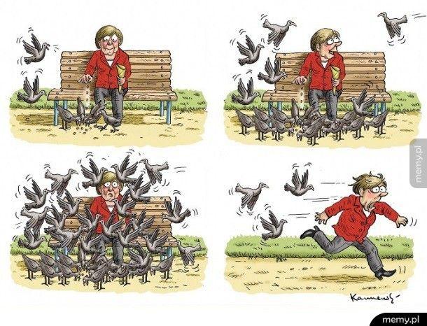 Merkel karmi ptaki