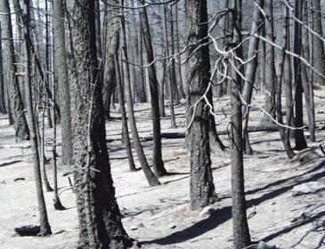 Puszcza Notecka – nie pytaj czy spłonie, tylko kiedy spłonie