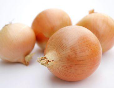 Cebula warzywo pełne zalet