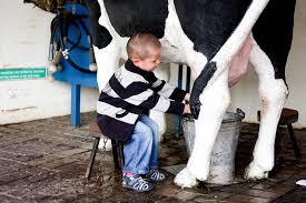 Kara za mleko