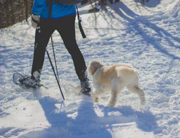 Na narty z psem