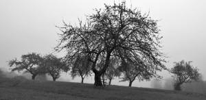 mgła fot. Jerzy Gorecki