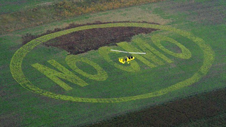 Ciąg dalszy błogosławieństw, jakie niesie nam GMO