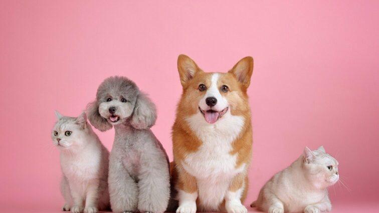 Team pies, czy team kot? PAYBACK bada preferencje zakupowe właścicieli zwierząt