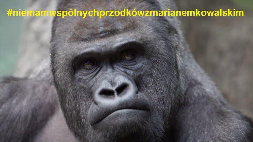 z22609668IH,Marian-Kowalski-walczy-z-teoria-ewolucji---Memy