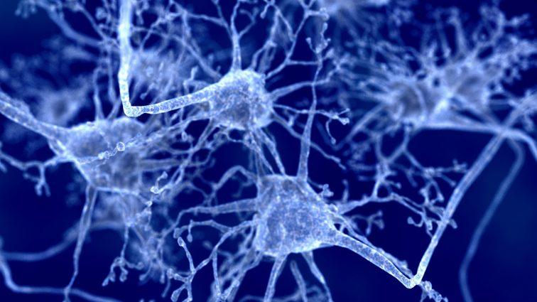 Stwardnienie rozsiane. Odkryto aż 12 podklas oligodendrocytów