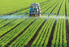 KE przedłuży licencję dla rakotwórczego herbicydu?